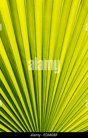 Palm leaves pattern - Stockfoto