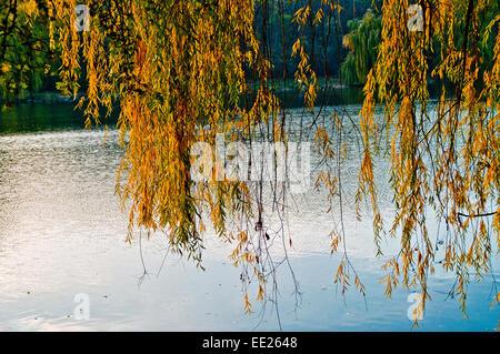 autumn background beautiful beauty bright bush colors day environment fall forest green hungary lake landscape light - Stock Photo