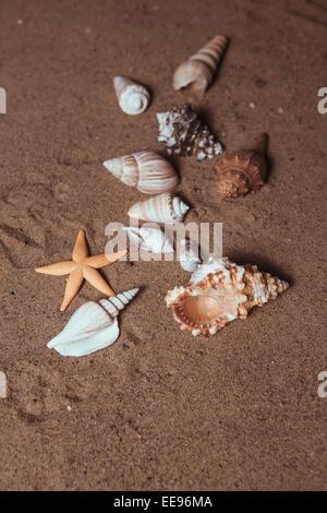 Seashells background - macro shot of beautiful seashells - Stock Photo
