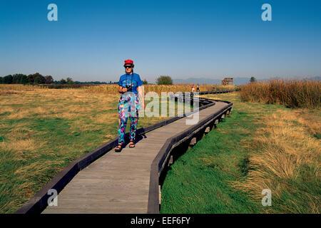 Woman walking on Boardwalk, and birdwatching / watching for Birds, Boundary Bay Regional Park, Delta, British Columbia, - Stock Photo