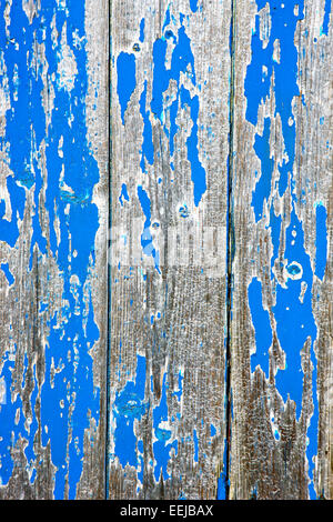 Peeling blue paint giving a distressed look to this section of wooden shed - Stock Photo