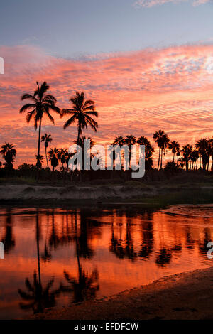 Silhouetted palm trees and lagoon at sunrise, Las Palmas Beach, Todos Santos, Baja California Sur, Mexico - Stock Photo