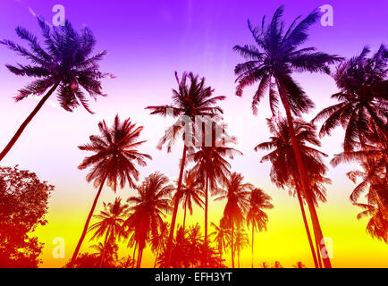 Palm trees silhouettes on tropical beach at sunset. - Stock Photo