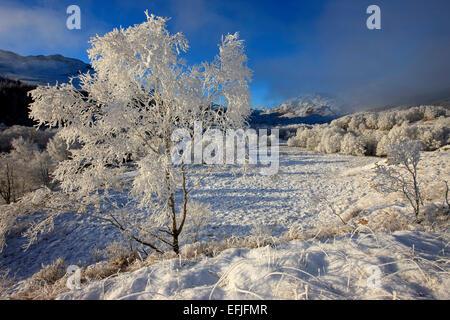 Winter wonderland near Glenfinnan, Lochaber - Stockfoto