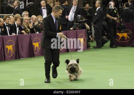New York, NY, USA. 17th Feb, 2015. Charlie, a skye terrier, performs at the 139th Annual Westminster Kennel Club - Stock Photo
