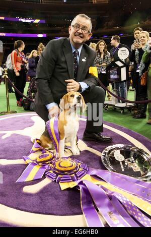 New York, NY, USA. 17th Feb, 2015. Miss P, a 15-inch beagle from the hound group, is shown by William Alexander - Stock Photo