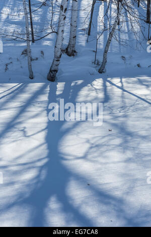 Paper Birch, aka White Birch, Betula papyrifera, casting shadows on snow-covered lake in central Michigan, USA - Stock Photo
