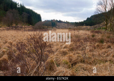 Scotland Dumfries and Galloway Countryside - Stock Photo