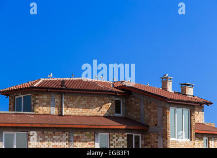 Seagulls on a tile roof against the sky - Stock Photo