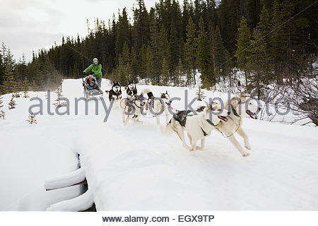 Family dogsledding across snowy bridge - Stock Photo