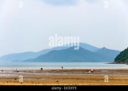 People digging for shellfish at Starfish Bay, New Territories, Hong Kong SAR - Stock Photo