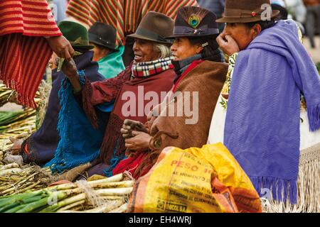 Ecuador, Cotopaxi, Zumbahua, day of the village of Zumbahua market, peasant women selling their garden products - Stock Photo