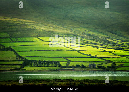 Green fields on the Ring of Kerry as seen from Valentia Island, Ireland - Stock Photo