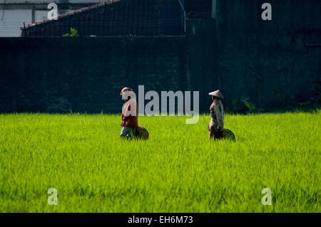 Women farmers on a rice field in Bandung regency, West Java, Indonesia. - Stock Photo