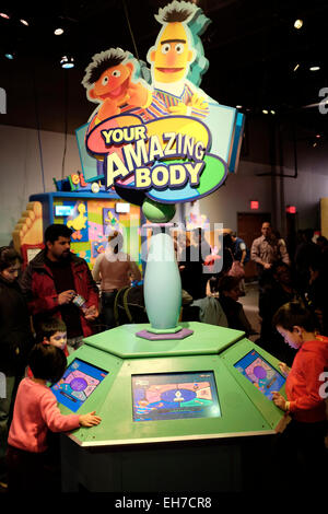 Your Amazing Body exhibition in Liberty Science Center in New Jersey USA - Stock Photo