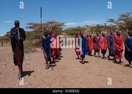 Maasai people dancing in the Ngorongoro Conservation Area in the Crater Highlands area of Tanzania Eastern Africa - Stock Photo