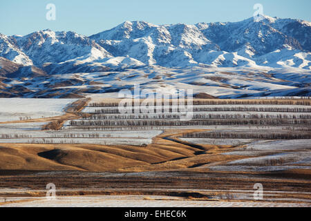 First snow on the fields - Stock Photo