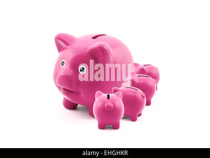 Pink piggy banks feeding from their mother - Stockfoto