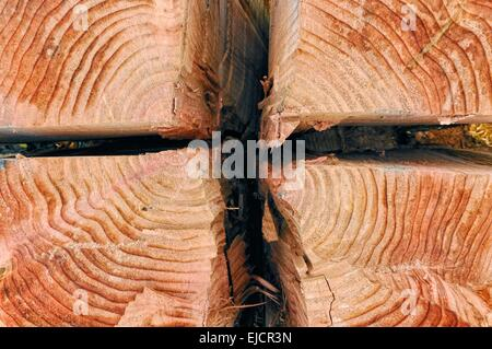 Heartwood Split from sequoia - Stock Photo