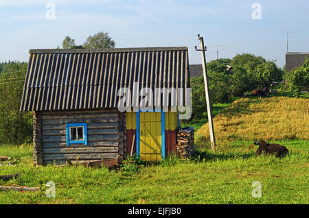 Rural landscape. Brown cow on pasture near bath house. - Stock Photo