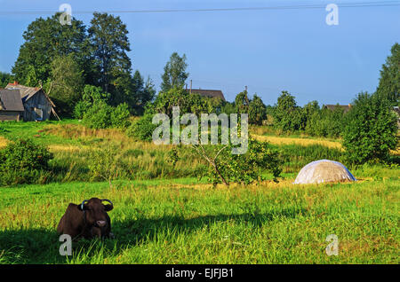 Rural landscape. Brown cow and haystack on pasture. - Stockfoto
