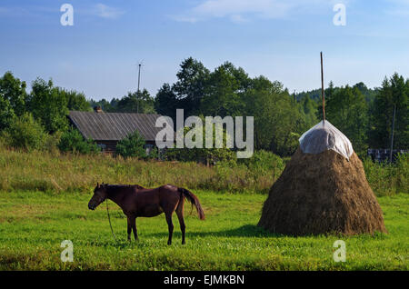 Rural landscape. Brown horse and haystack on pasture. - Stockfoto