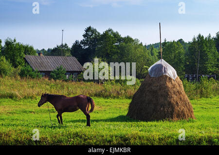 Rural landscape. Brown horse and haystack on pasture. - Stock Photo