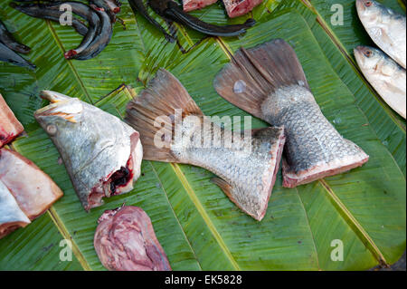 Close up of fish head, fish tails and fish guts on a green banana leaf in a Yangon food market Myanmar - Stock Photo