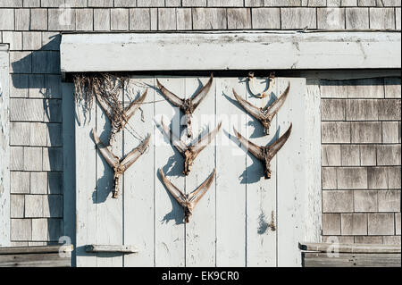 Rustic shack with fish tail dispay on door, Cape Cod, Massachusetts, USA - Stock Photo