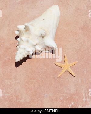 conch and starfish on sandy beach - Stock Photo