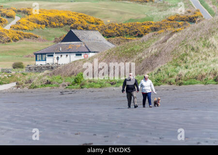 Couple walking dogs on Newport Sands Beach on a windy blowy day, Pembrokeshire Coast National Park, Wales in May - Stockfoto