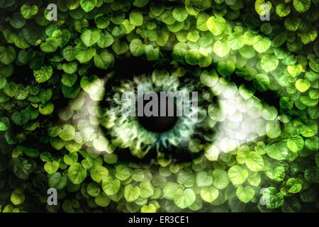Double exposure of a human eye and wall of ivy - Stock Photo