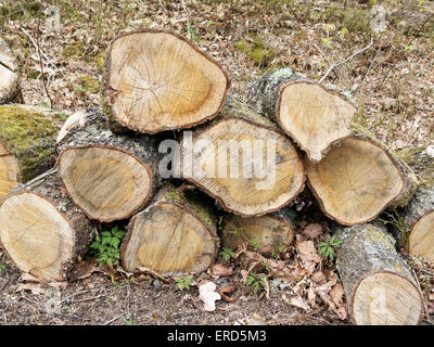 some  oak stock from the wood it will be firewood - Stock Photo