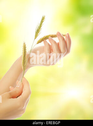 Woman's hand with dry herb - Stock Photo