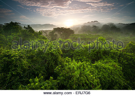 Sunrise in the rain forest of Soberania national park, Republic of Panama. - Stock Photo