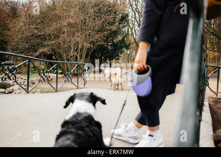 Low section of woman standing with mixed-breed dog on bridge at park - Stock Photo