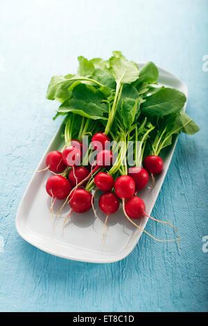 Bunch of fresh red radish on blue background - Stock Photo