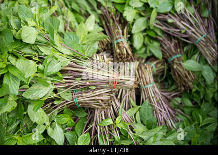 Bundles of fresh mint stacked in a display at an outdoor fruit and vegetable market in Bangkok Thailand - Stock Photo