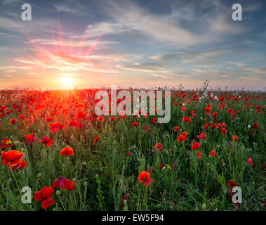 Sunset over a field of vibrant red Poppies and wildflowers - Stock Photo