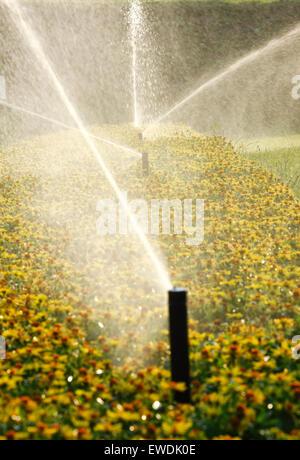 Lawn sprinklers - Stock Photo