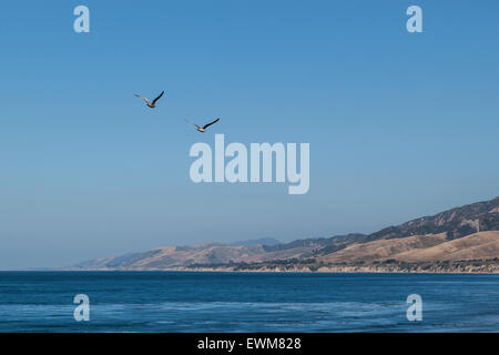 Two seagulls fly over the pacific ocean in Santa Barbara County. - Stock Photo