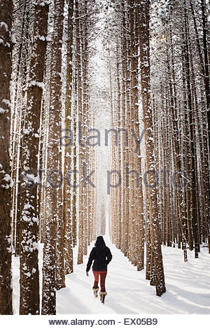 Woman walking through snow covered forest, Omemee Ontario Canada - Stock Photo