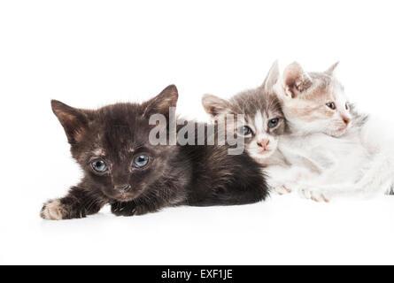 Little kitten - Stock Photo