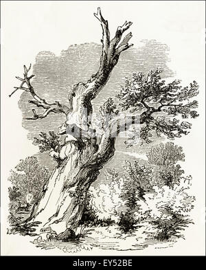 The Parliament Oak, Clipstone Park in Sherwood Forest Nottinghamshire. Victorian woodcut engraving circa 1845. - Stock Photo