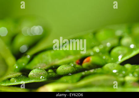 Macro photograph of a green leaf covered by after rain droplets - Stock Photo