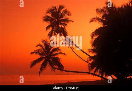 Palm trees over calm shore with heron and passing boat at dawn in Maldive Islands - Stock Photo