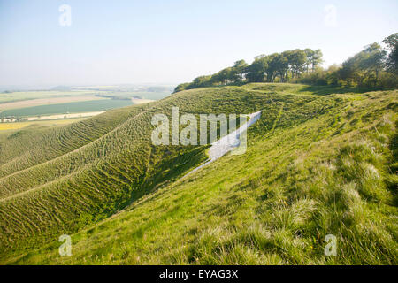 chalk hill cougars personals The uffington white horse is a highly stylised prehistoric  supporting the early dating of this  dragon hill is a natural chalk hill with an artificial .