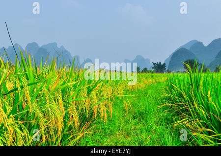 Beautiful Li river side Karst mountain rice landscape in Yangshuo Guilin, China - Stock Photo
