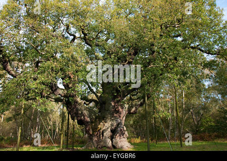 The Major Oak in Autumn at Sherwood Forest National Nature Reserve, Edwinstowe Nottinghamshire England UK - Stock Photo