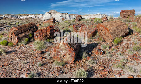 Petrified Forest National Park, AZ - Stock Photo